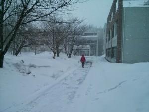 snow akita